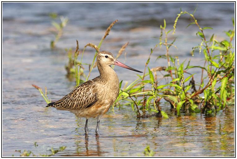 Oiseaux du bord de Loire dans Nature MG_0784_DxO