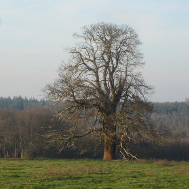Un arbre remarquable dans Nature IMG_0325_1