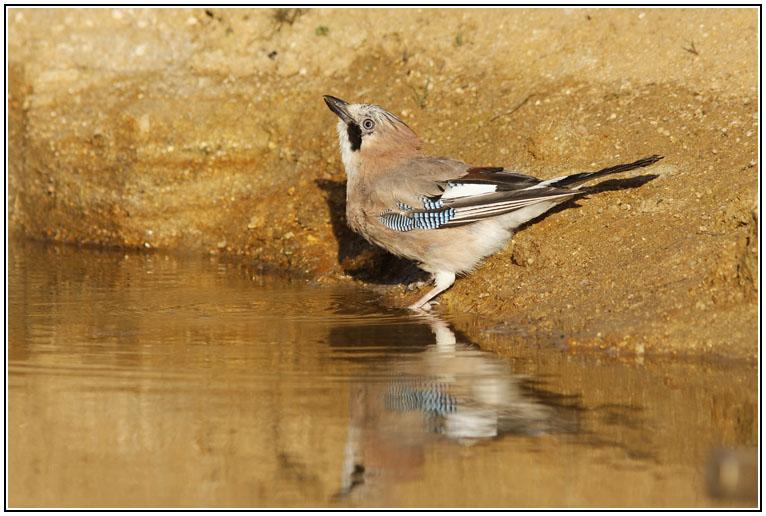Le coin des ornithologues dans Nature MG_8709_DxO
