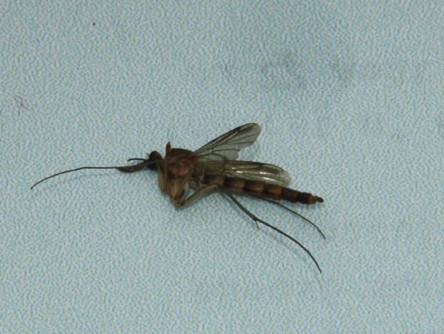 des moustiques tigres en brionnais mairie semur en brionnais infos. Black Bedroom Furniture Sets. Home Design Ideas