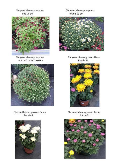 chrysantèmes-page-002_1