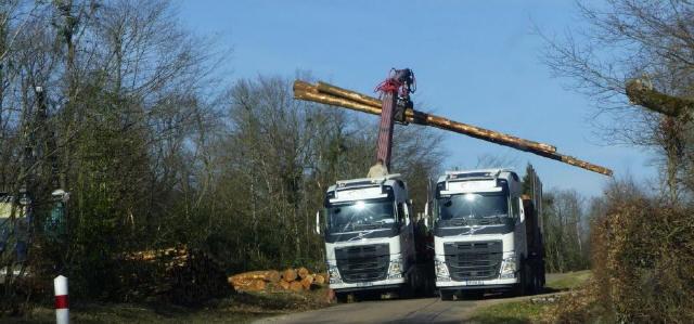 des-camions-munis-de-grappins-recoltent-les-troncs-en-attente-photo-f-c-1550939745_1