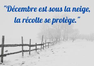 Décembre sous la neige
